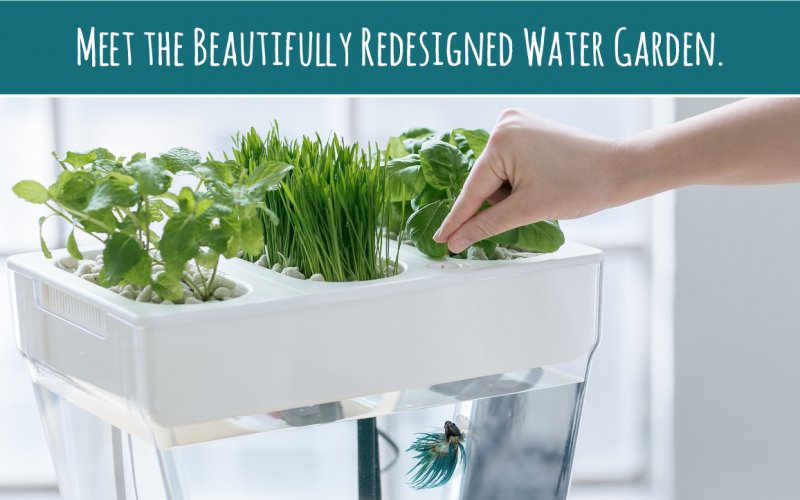Meet the beautifully redesigned Water Garden